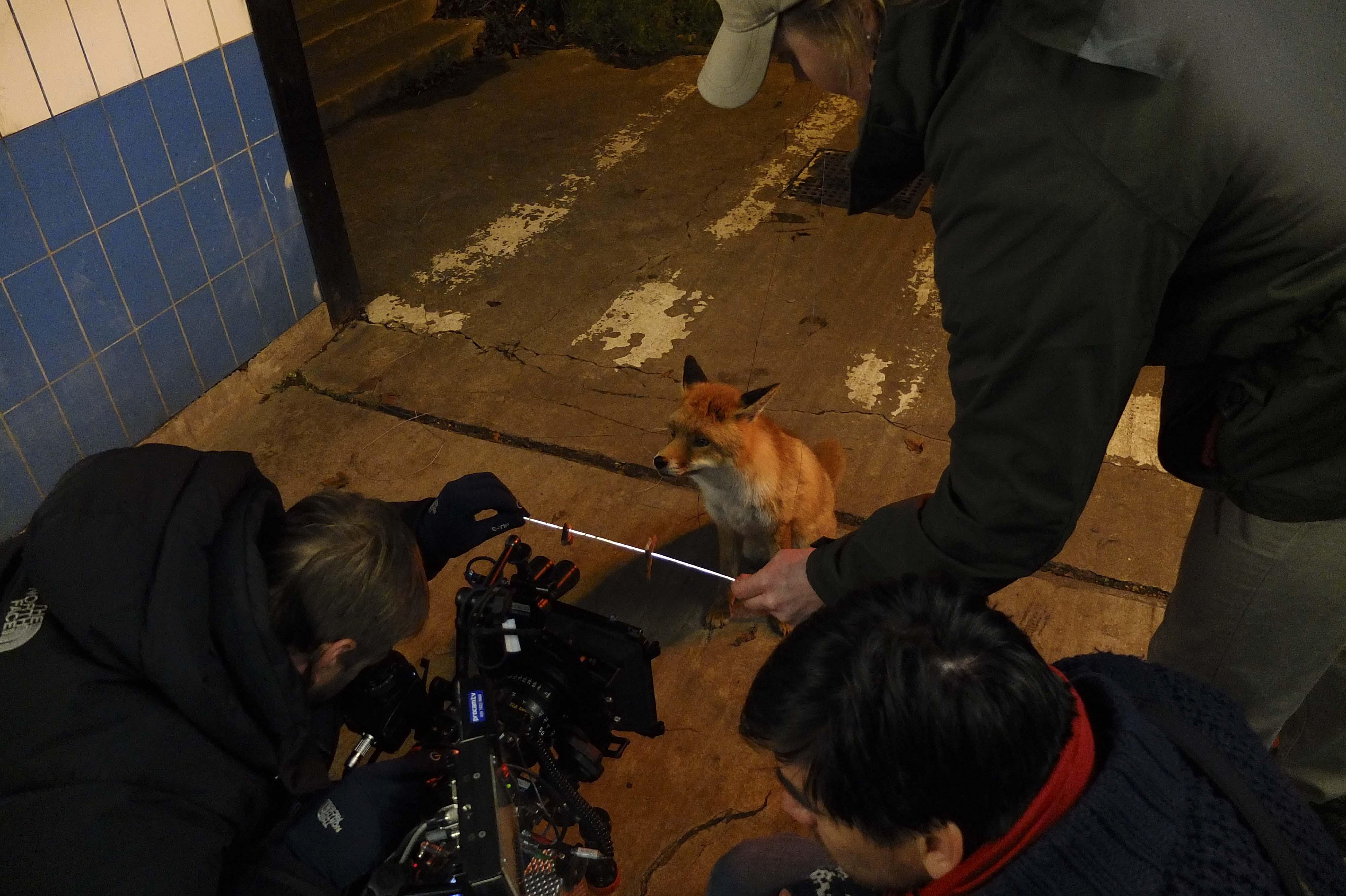 fox + sardines + camera